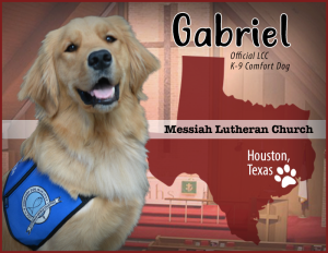 "Gabriel is Houston's first Comfort Dog. Follow him on Facebook at ""Gabriel Comfort Dog""."